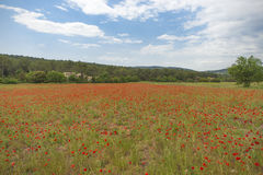 Poppy Field Provence Stock Photo