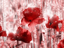 Poppy field in red Stock Image