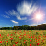 Poppy on the field Stock Photography