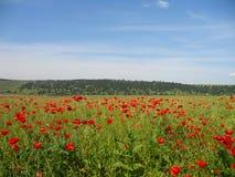 Free Poppy Field, Summer Landscape Stock Image - 138850171