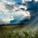 Poppy field with sun rays Stock Photo
