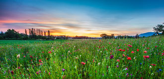 Poppy Field and and Sunrise Stock Photography