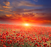 Poppy field on sunset royalty free stock photography