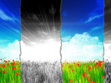 Poppy field with torn paper effect Royalty Free Stock Images