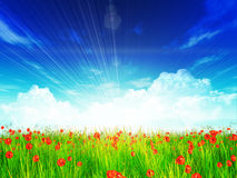 Poppy field under blue sky Stock Photos