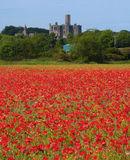 Poppy field at Warkworth Stock Photos