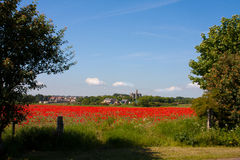 Poppy field at Warkworth Royalty Free Stock Photos