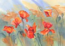 Poppy field watercolor. Watercolor flowers poppies field in the sun Stock Photos