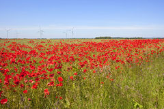 Poppy field with wind turbines Royalty Free Stock Photo