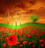 Poppy field with wind turbines in background Royalty Free Stock Photography