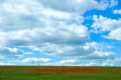 Poppy Field With Powerlines Stock Image