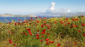 Poppy Fields of Delos. Poppies cover hillside overlooking the Greek islampnds Stock Photography