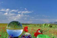 Poppy fields,flowers and crystal quartz Stock Image
