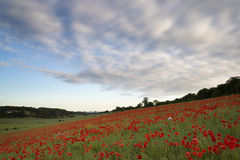 Poppy fields landscape Summer sunset. Royalty Free Stock Photos