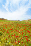 Poppy fields of Prevelhi Royalty Free Stock Photography