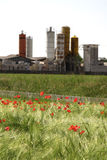 Poppy filed against  industrial plant Stock Images