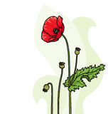 Poppy floral background Stock Photography