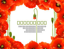 Poppy Floral Frame. Vector red Poppy Floral Frame Royalty Free Stock Image