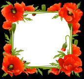 Poppy Floral Frame. Vector red Poppy Floral Frame Royalty Free Stock Photo