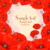 Poppy Floral Frame bakgrund Arkivfoto