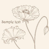 Poppy flower. Pastel greeting card Royalty Free Stock Images
