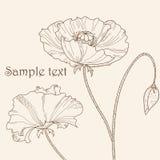Poppy flower. Pastel greeting card