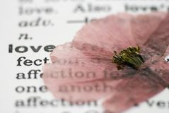Poppy flower on book Stock Image