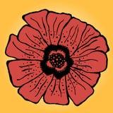 Poppy flower Stock Photography