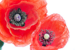 Poppy flower close-up Royalty Free Stock Photography