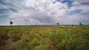 Poppy Flower Field Overfly filme