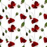 Poppy flower field seamless pattern. Poppy flower field  seamless patternon white background Royalty Free Stock Image