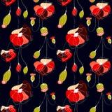 Poppy flower field. Poppy flower summer  seamless pattern, black background Royalty Free Stock Images