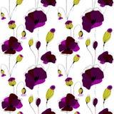 Poppy flower field. Poppy flower summer  seamless pattern, white background Royalty Free Stock Images