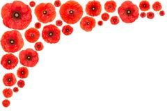 Poppy flower frame. Red poppy flower frame isolated on white background Royalty Free Stock Photos