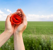 Poppy flower in the hand of man. green field and blue sky. Stock Photography