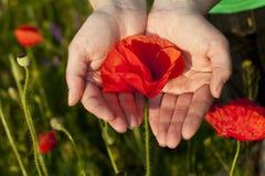 Poppy flower hands Royalty Free Stock Image