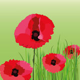 Poppy Flower Royalty Free Stock Photos