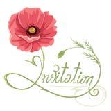 Poppy flower -- invitation Stock Images
