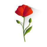Poppy Flower Isolated rouge Photo libre de droits