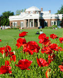 Poppy flower in Monticello. Poppy flower in bloom in Monticello. Monticello is the house and plantation of Thomas Jefferson, the third President of the United Stock Photo