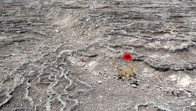 Poppy flower in Pamukkale Stock Images