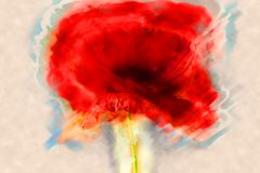 Poppy flower or papaver rhoeas poppy with the light royalty free stock photos