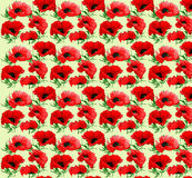 Poppy flower pattern as background Royalty Free Stock Images