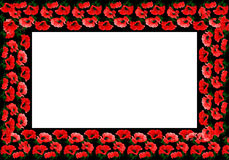 Poppy flower pattern as frame Royalty Free Stock Photos