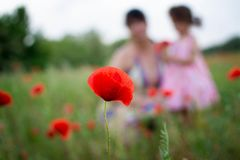 Poppy flower with people, green royalty free stock photo