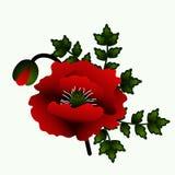 Poppy flower. Red poppy isolated on white background. Vector Illustration Stock Images