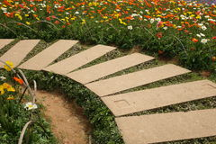 Poppy flower with stone path Stock Photography