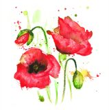 Poppy flower. Watercolor drawing with splashes and streaks of a red poppy flower Royalty Free Stock Photography