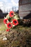 Poppy Flower Wreath Stock Photography
