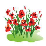 Poppy flowers Royalty Free Stock Photography